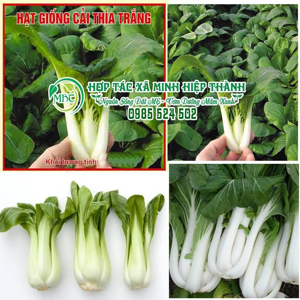 Hạt giống cải thìa trắng - 10036228 , 197098480 , 322_197098480 , 15000 , Hat-giong-cai-thia-trang-322_197098480 , shopee.vn , Hạt giống cải thìa trắng