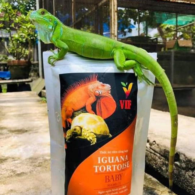 Vif- thức ăn bổ sung cho Iguana+ Rùa