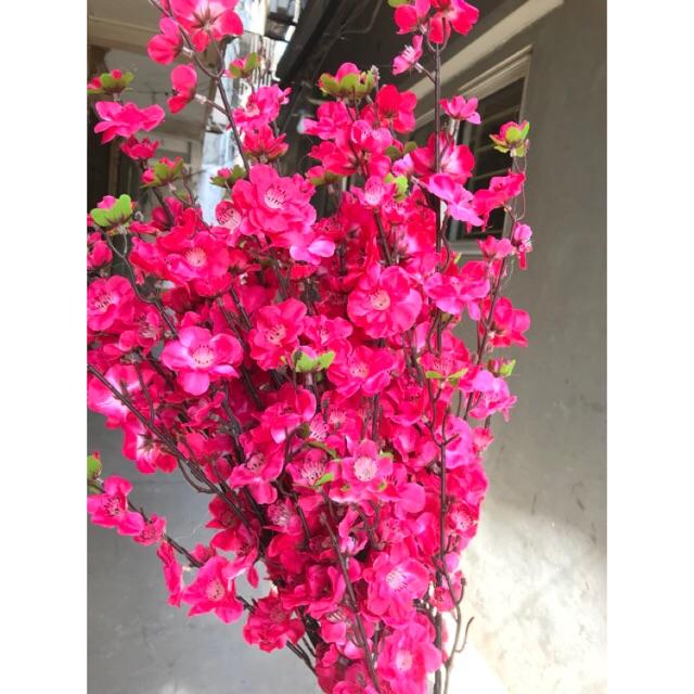 Hoa đào giả - Đào bích