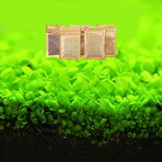 [Nhiều loại] Hạt giống thủy sinh bể cá cây thủy sinh cỏ thực vật dùng cho bể cá hồ cá thủy sinh thumbnail