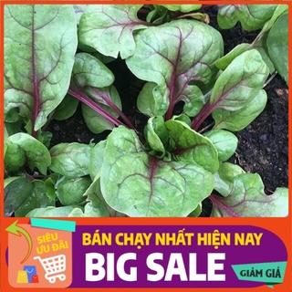 [ Hạt Giống Xanh ] Hạt giống cải bó xôi gân đỏ