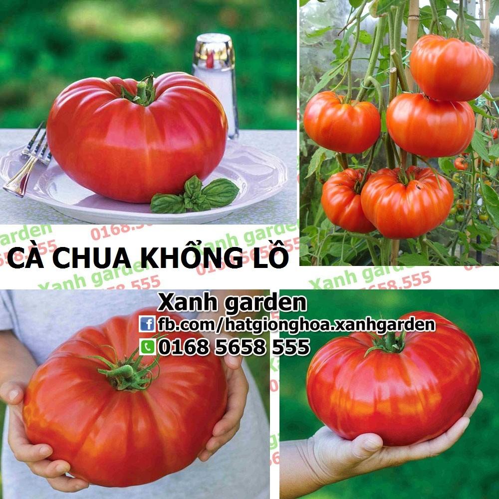 Hạt giống Cà chua khổng lồ - 2736132 , 164937906 , 322_164937906 , 60000 , Hat-giong-Ca-chua-khong-lo-322_164937906 , shopee.vn , Hạt giống Cà chua khổng lồ