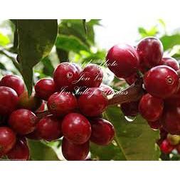 Cà phê Moka rang mộc xay nguyên chất 250g -DƯƠNG CAFE