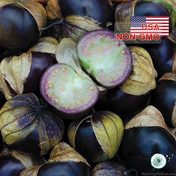 10h Hạt Giống Cà Chua Tomatillo - Tím (Physalis ixocarpa)