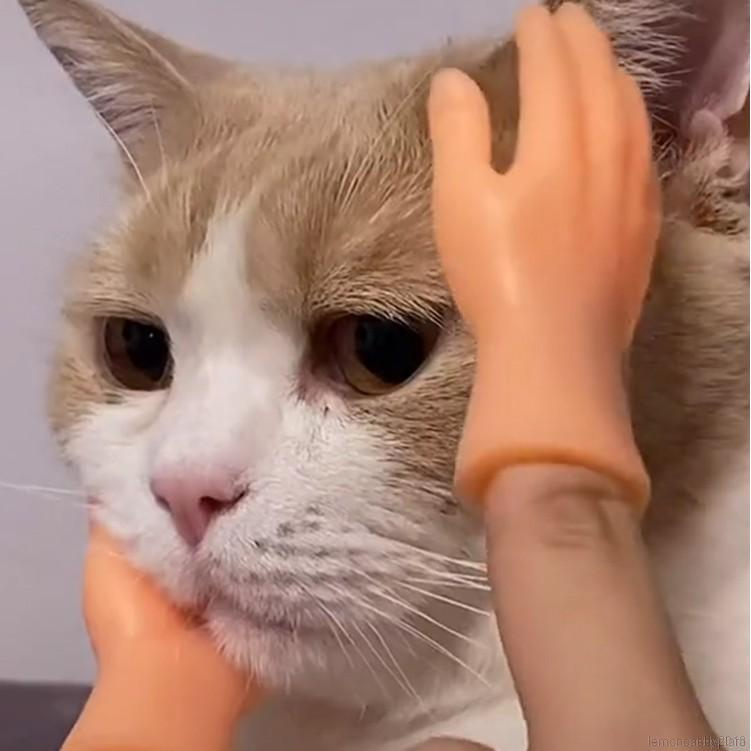 [COD]1 Pair Novelty Barbie Hand Model Toy Cat Massage Mini Palm Funny Five Fingers Open Palms Toys