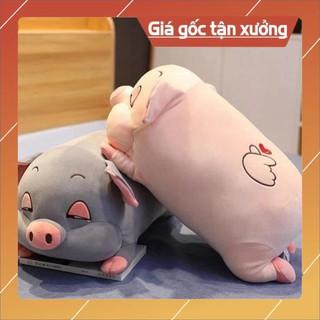 Hàng siêu cấp GẤu lợn bông xinh xắn