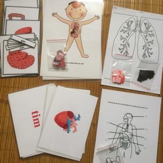 Học liệu các bộ phận bên trong cơ thể (organs human)