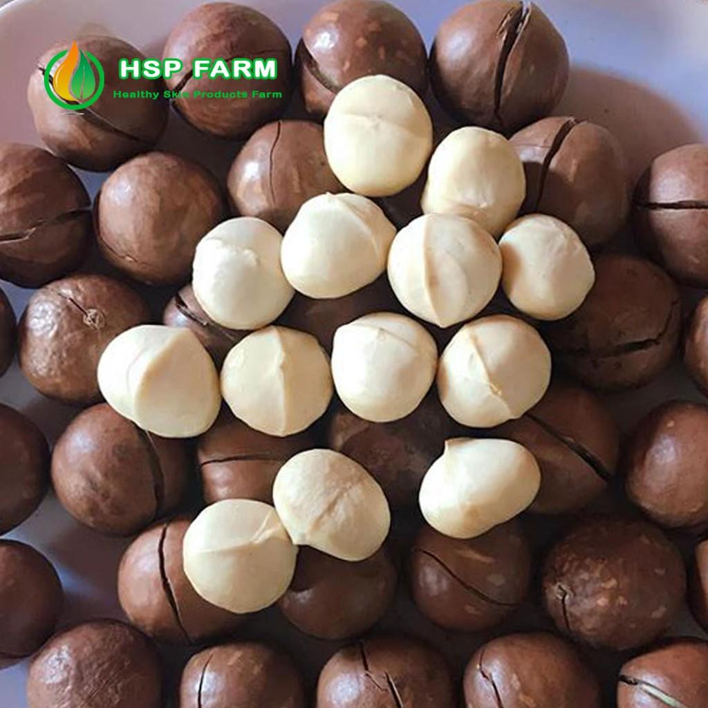 Hạt Macca Daklak sấy hàng vườn HSP Farm (Mắc ca Tây Nguyên )