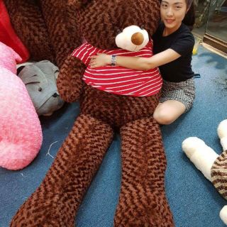 [ Gấu bông 2m ] Gấu bông teddy cao cấp 2m giá siêu rẻ