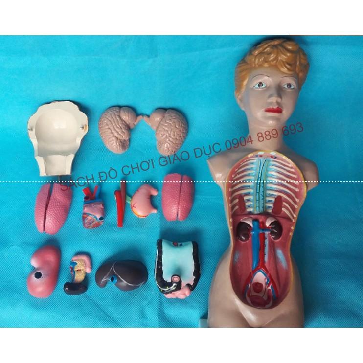 Mô hình các bộ phận cơ thể người