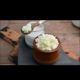 Nấm sữa Kefir( con nấm sữa tao ra sữa chua. Xuất xứ : Việt Nam, HSD : Vĩnh viễn)