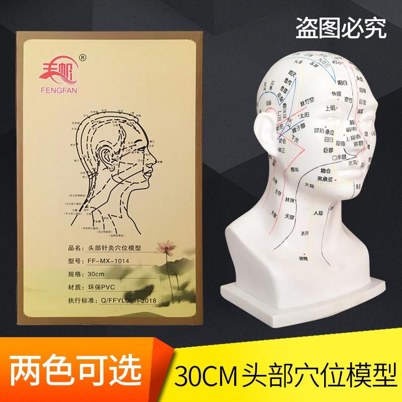Mô Hình Đầu Người Kiểu Trung Hoa Dùng Trong Y Tế