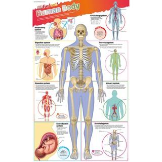 Sách DKfindout Human Body Poster - Dành Cho Học Sinh Từ 5 tuổi thumbnail