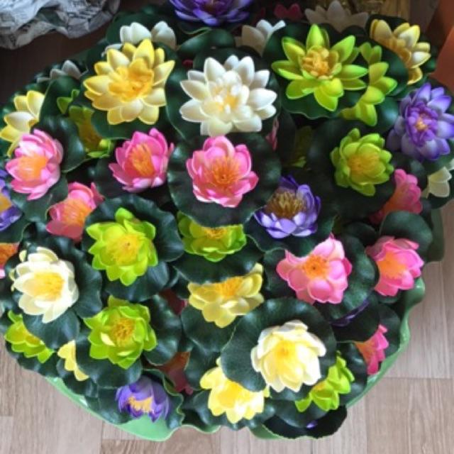 Hoa sen thả hồ