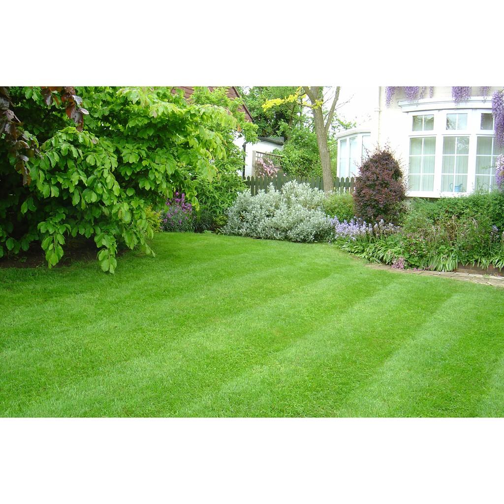 Hạt cỏ nhung nhật 1kg (cỏ