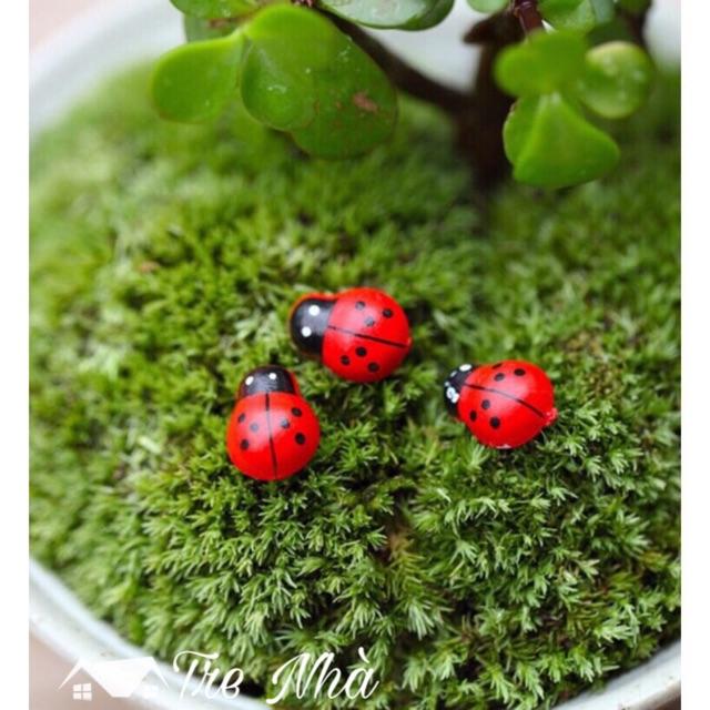 Tiểu cảnh trang trí - 5 Bọ cánh cứng làm phụ kiện trang trí sen đá, terrarium, cây cảnh để bàn, cây mini