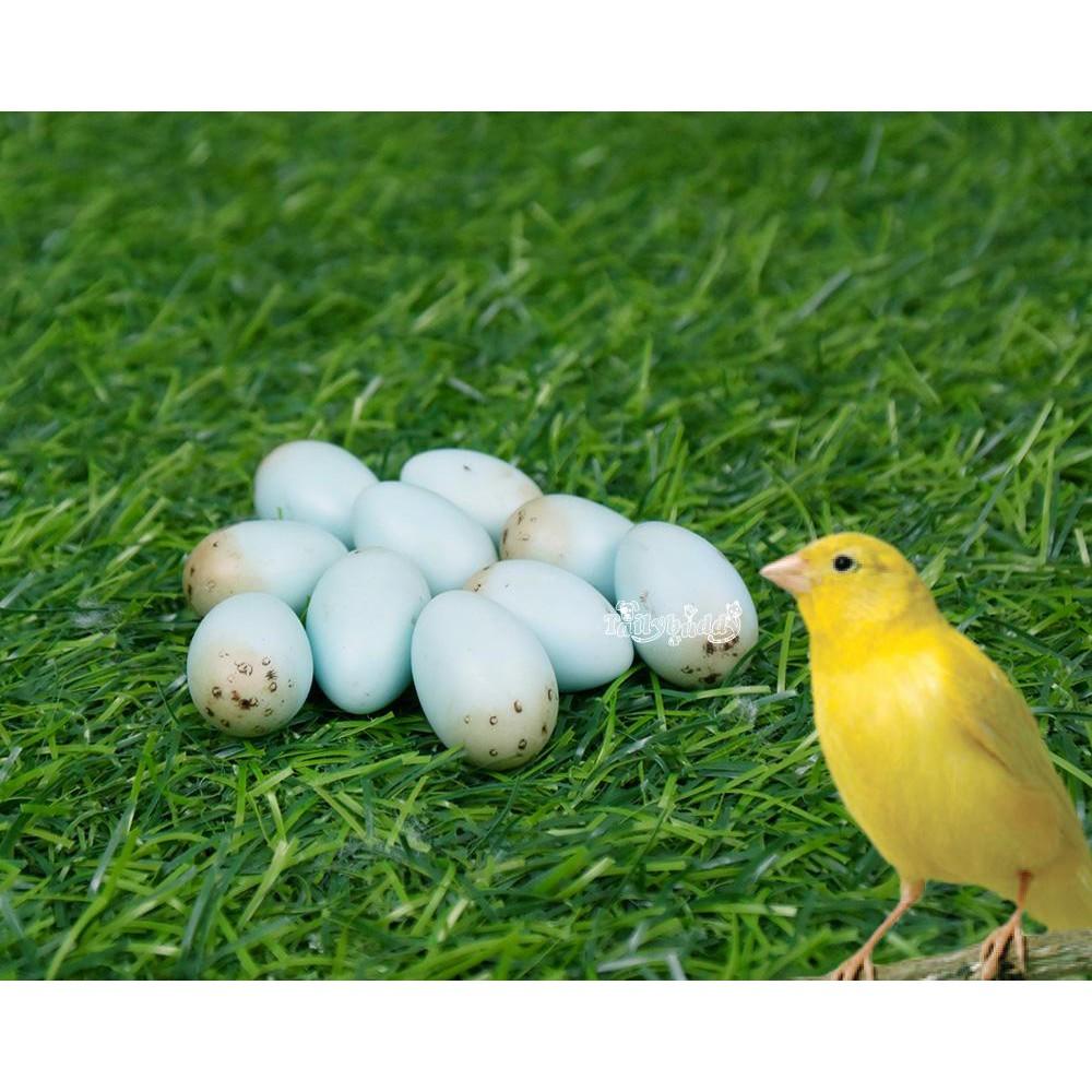 ไข่เทียม แก้ปัญหาลูกนกตายคารังก่อนโต สำหรับนกคีรีบูน (10 ฟอง)