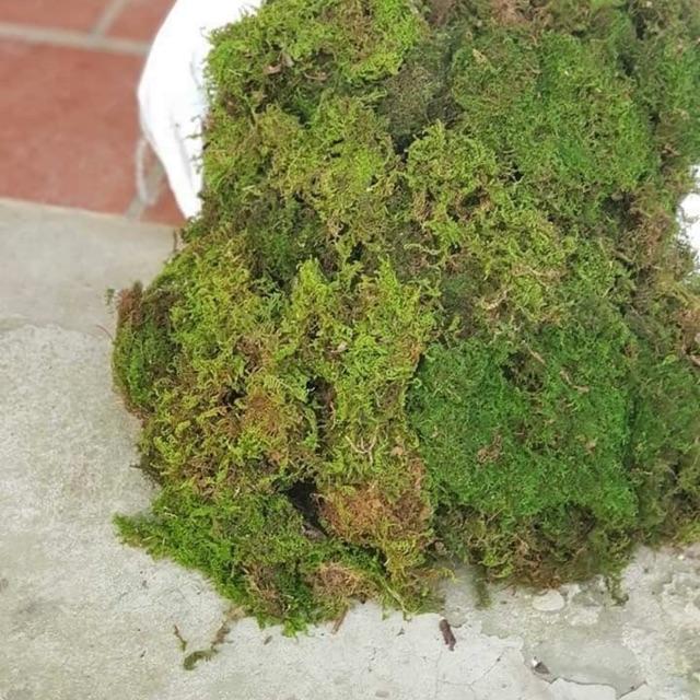Rêu rừng