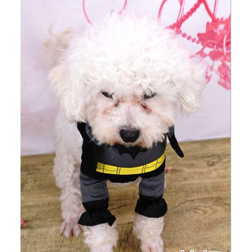 [CỰC HOT]  Bộ quần áo Cosplay Batman dành cho Chó Mèo   Sản Phẩm Bán Chạy
