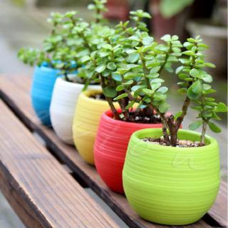 Chậu hoa nhựa mini nhiều màu xinh xắn đáng yêu trang trí nhà cửa văn phòng 2