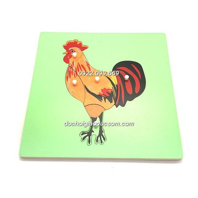 Bảng ghép hình Montessori Puzzle - Sinh học - Hình con gà