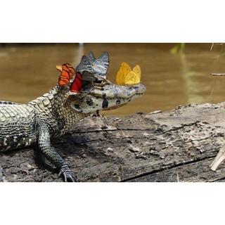 Cá Sấu Made in korea ha há
