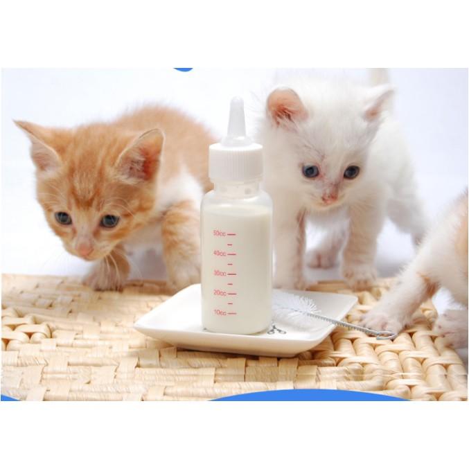 Cảnh báo khi mua sữa bột trẻ em dùng cho chó mèo