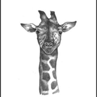 Com bo 28 bộ Thẻ Animal 4D