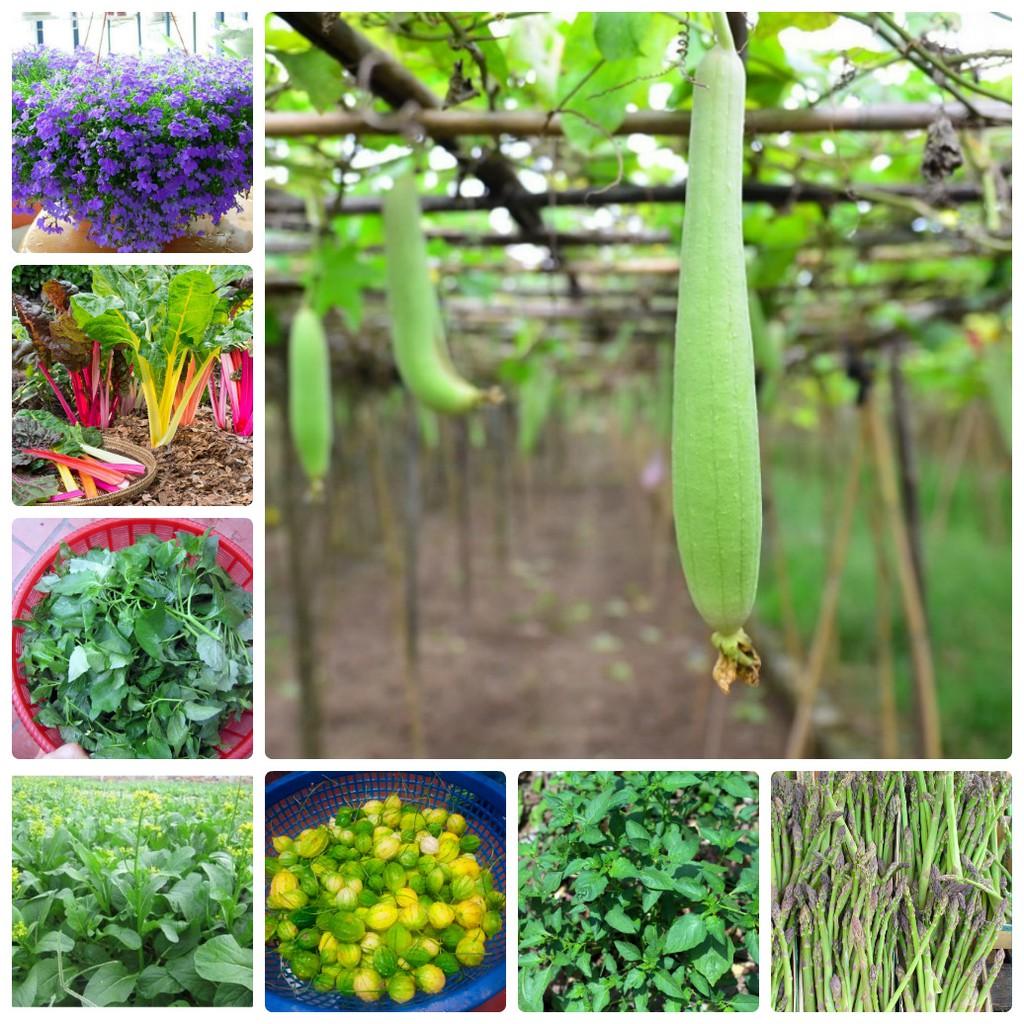COMBO hạt giống rau hoa LUCKY siêu tiết kiệm HOT VIP 5 FRE
