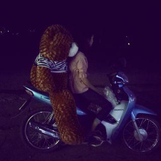 Gấu Teddy 🐻