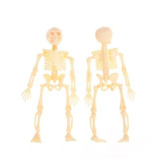 Skeleton Human Model Skull Full Body Mini Figure Toy Halloween