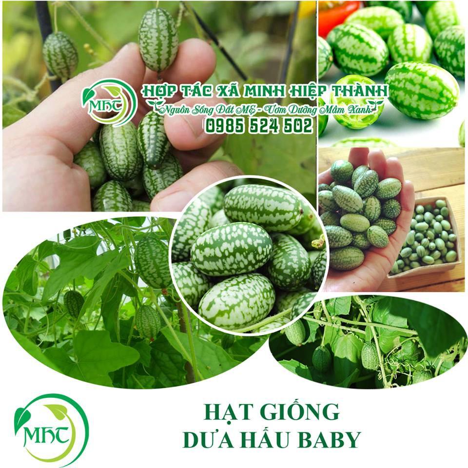 Hạt giống dưa hấu baby mexico - 3035949 , 1002076542 , 322_1002076542 , 25000 , Hat-giong-dua-hau-baby-mexico-322_1002076542 , shopee.vn , Hạt giống dưa hấu baby mexico