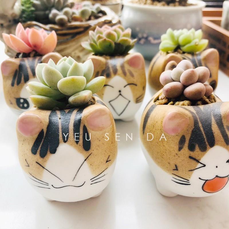 Chậu Sen đá mini Mèo con dễ thương (cây & chậu)
