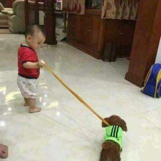 Chó bông biết hát