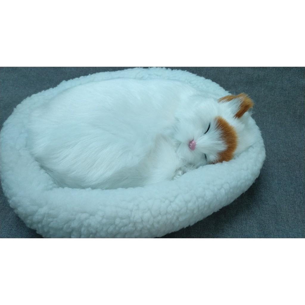Mua mèo nhồi bông - Búp bê \u0026 Đồ chơi nhồi bông Đồ Chơi Th03 2019 giá cực tốt | Shopee Việt Nam