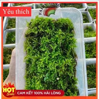 Combo 4 loại rêu bán cạn