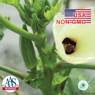 5g Hạt Giống Đậu Bắp - Lùn Cao Sản Clemson (Abelmoschus esculentus)