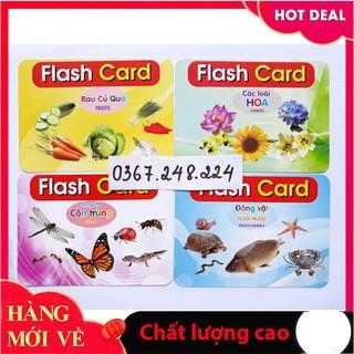 [Trợ giá] Bộ thẻ học loại to (kt 12x16cm)_Hàng tốt
