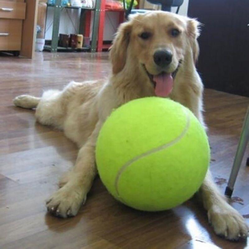 Đồ chơi quả banh tennis cho thú cưng