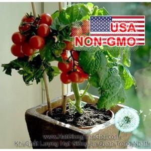 5h Hạt Giống Cà Chua - Lùn Cao Sản 40XD Tim (Solanum Lycopersicum) - 3524536 , 816961921 , 322_816961921 , 18000 , 5h-Hat-Giong-Ca-Chua-Lun-Cao-San-40XD-Tim-Solanum-Lycopersicum-322_816961921 , shopee.vn , 5h Hạt Giống Cà Chua - Lùn Cao Sản 40XD Tim (Solanum Lycopersicum)