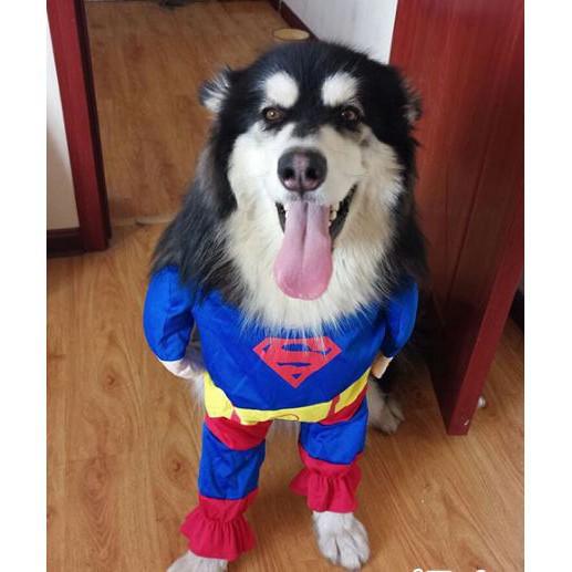 [CỰC RẺ]  Bộ quần áo Cosplay Superman dành cho Chó Mèo   Top Bán Chạy
