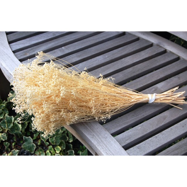 30g hoa baby broom bloom