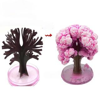 Cây Hoa Anh Đào Magic Sakura thần kì nở hoa tuyết màu hồng loại lớn DIY