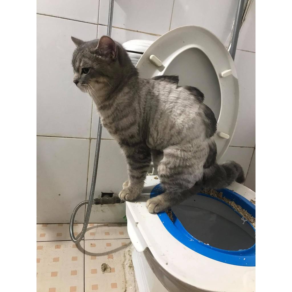 Bộ huấn luyện mèo đi vệ sinh vào toilet nhập khẩu cao cấp chính hãng