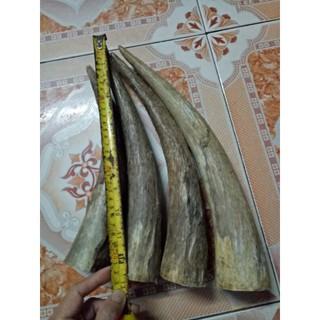 sungbochauphi-ngang 6cm, Dài 28-32cm