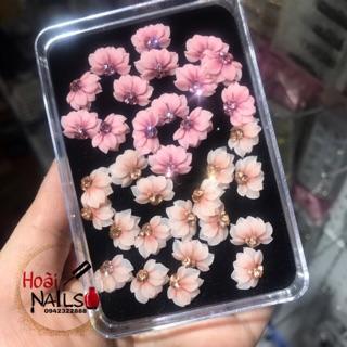 Hoa bột cúc nửa (1 bông) thumbnail