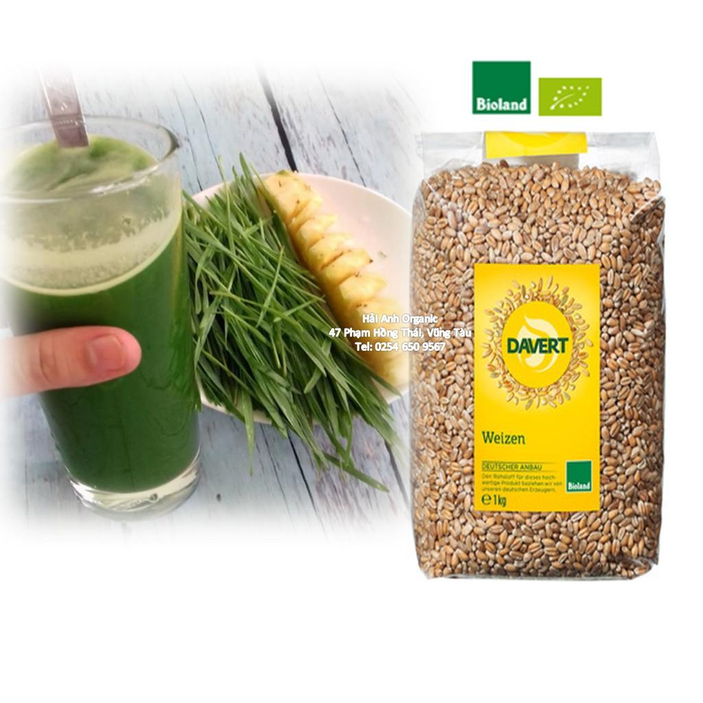 Hạt giống mầm lúa mì share 500gr vào túi Zip - 3227823 , 380461659 , 322_380461659 , 150000 , Hat-giong-mam-lua-mi-share-500gr-vao-tui-Zip-322_380461659 , shopee.vn , Hạt giống mầm lúa mì share 500gr vào túi Zip