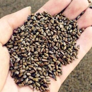 Combo 10kg hạt muồng xúc cát cho bé