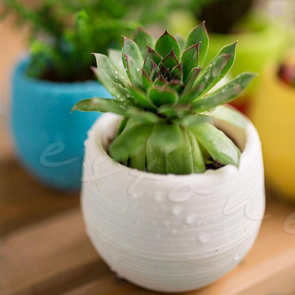 Chậu hoa nhựa mini nhiều màu xinh xắn đáng yêu trang trí nhà cửa văn phòng 3