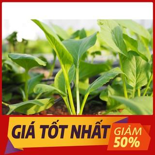 Hạt giống Cải Ngọt 20gr ~4000 Hạt